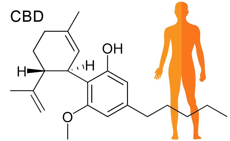 kanabinoid CBD je najpomembnejši element v CBD pasti in CBD smoli