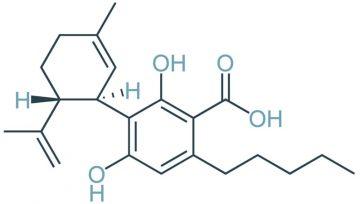 CBD ni edini zdravilni kanabinoid