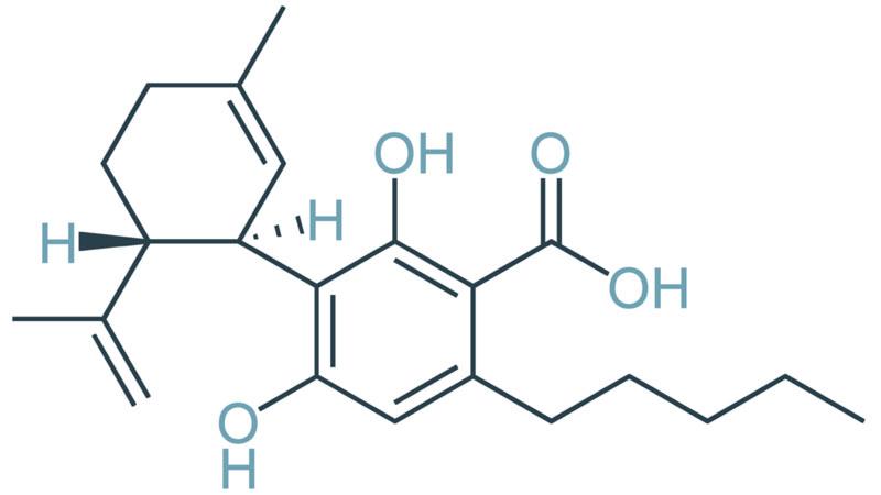Zdravilni kanabinoid v slovenski konoplji